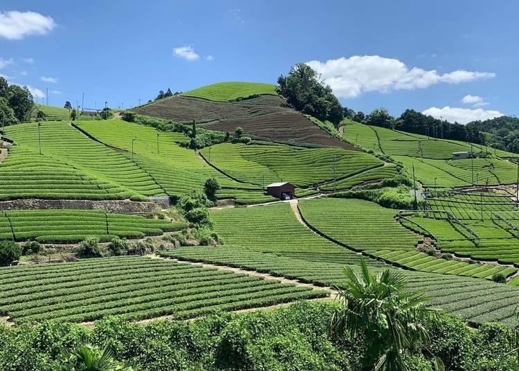 5. Chagenkyō Tea Plantations: A major production center of uji green tea