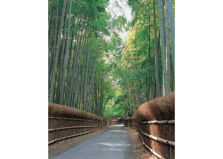 9. Take-no-Michi Mukō City: A little-known bamboo forest that's not in Arashiyama