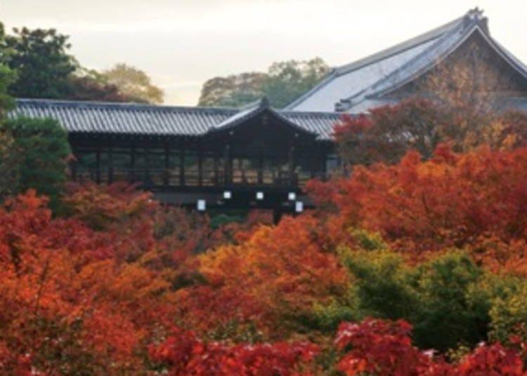 1. Tofukuji Temple: Kyoto's Most Famous Autumn Views