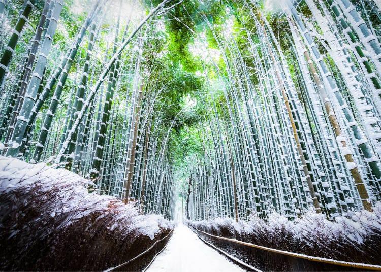 10.幽玄の世界に誘われる「竹林の小径」