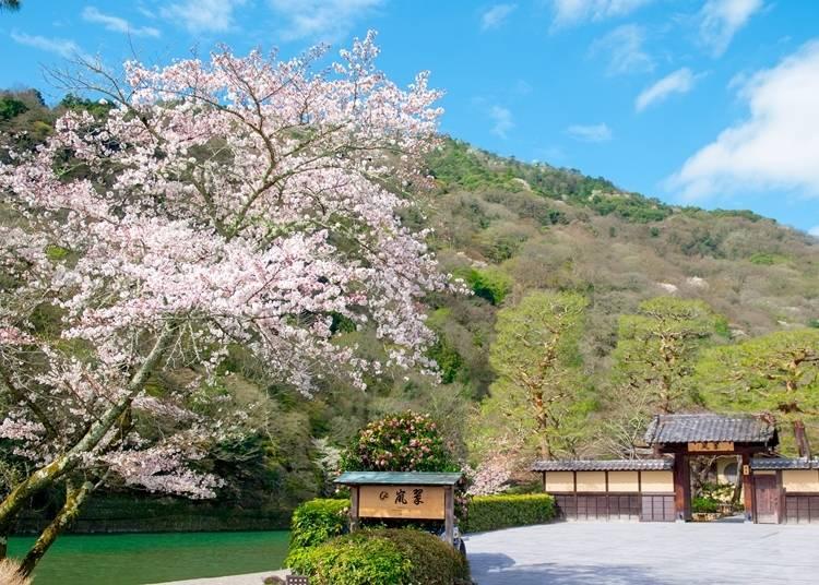 200本もの桜が観られる世界遺産・天龍寺から徒歩約2分の場所にある「翠嵐(すいらん) ラグジュアリーコレクションホテル 京都」