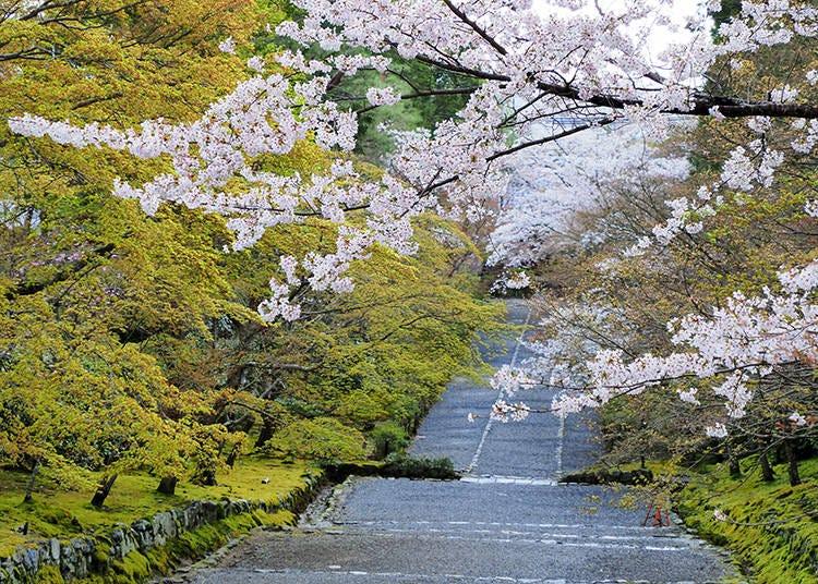 嵐山の桜の穴場・二尊院へは個性派ホテル「リバーサイド嵐山」が便利!
