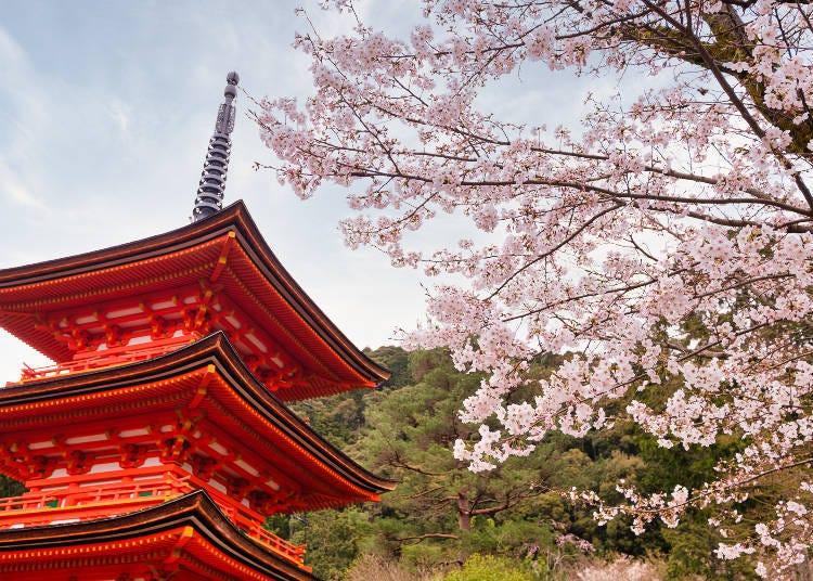 약 1,500그루의 벚꽃이 만개하는 기요미즈데라가 도보권 내! 시내 중심부의 '호텔 교토키야마치'