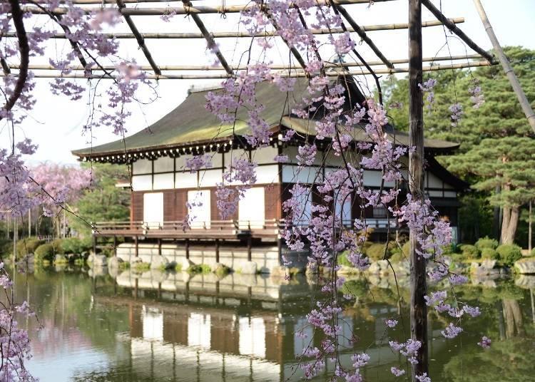 近京都代表紅垂櫻景點平安神宮的「飯店平安之森 京都」