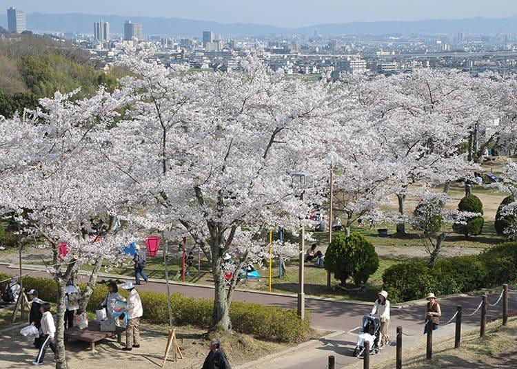 5. 摂津峡桜まつり ※2021年中止