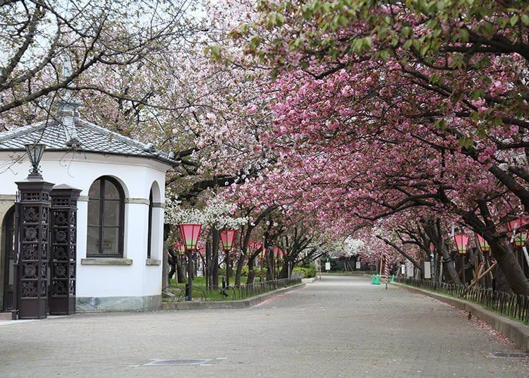 2. 조폐국 벚꽃길 통과행사 (사전 신청제)
