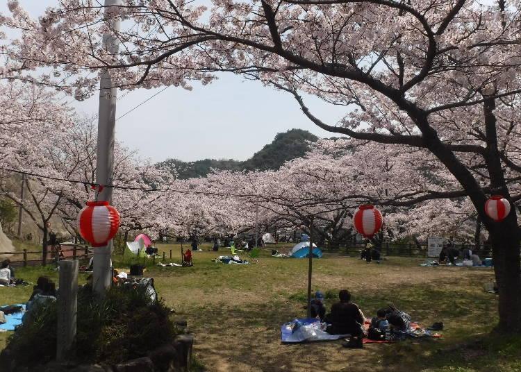 9. 에이라쿠 벚꽃축제 ※2021년 취소