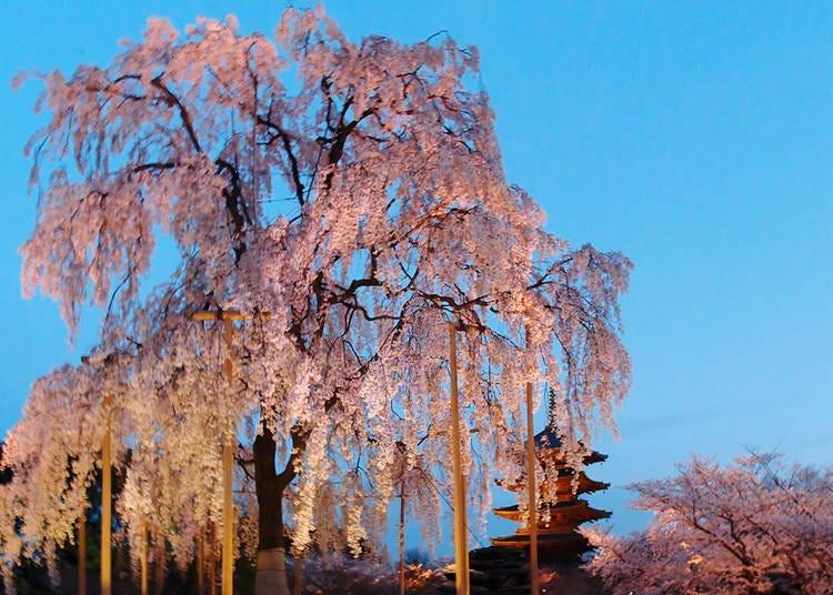 4. Tō-ji Spring Special Opening