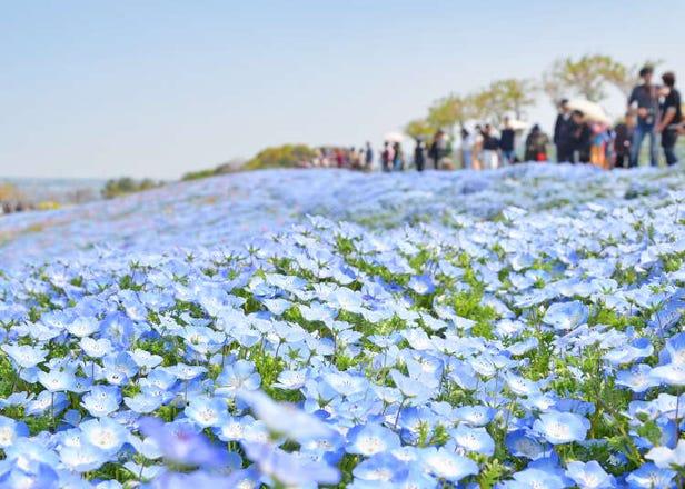 2021年の春に行きたい関西の絶景花畑【兵庫・大阪・滋賀】