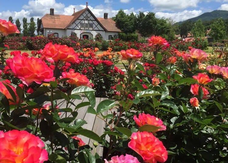 3: バラやパンジーに囲まれる優雅なひととき「滋賀農業公園 ブルーメの丘」