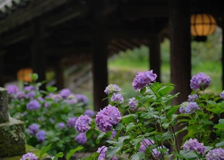 3. Hasedera Temple (Nara): A Temple Where Flowers Decorate Each Season