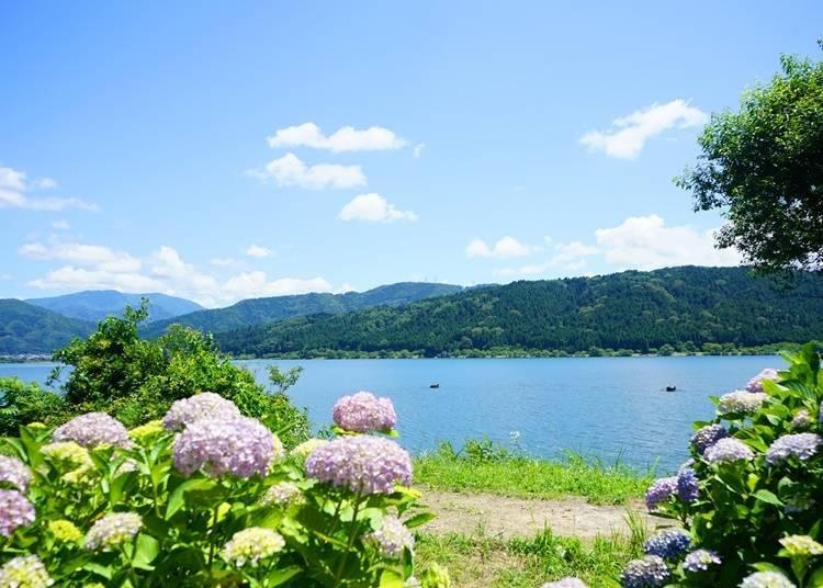 8. Lake Yogo Hydrangea Garden (Shiga): Enjoy Beautiful Views of the Lake and Hydrangeas