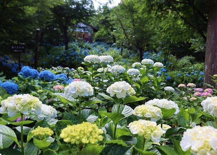 【京都府】被寂靜包圍的大原之里—三千院