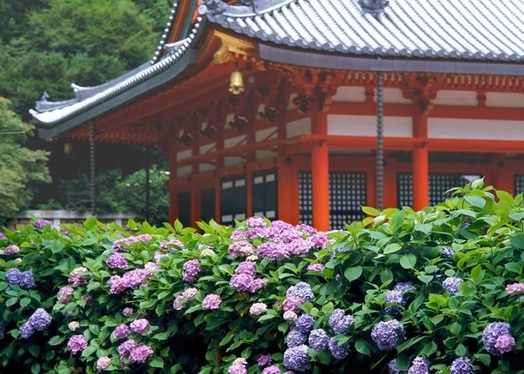 【大阪府】 境內滿滿都是花卉、不倒翁—勝尾寺