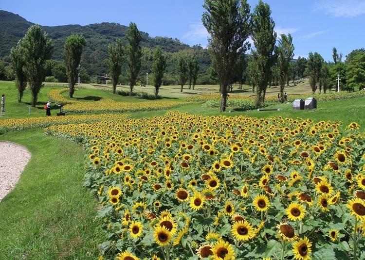4.四季の花とアクティビティ満載「淡路島国営明石海峡公園」