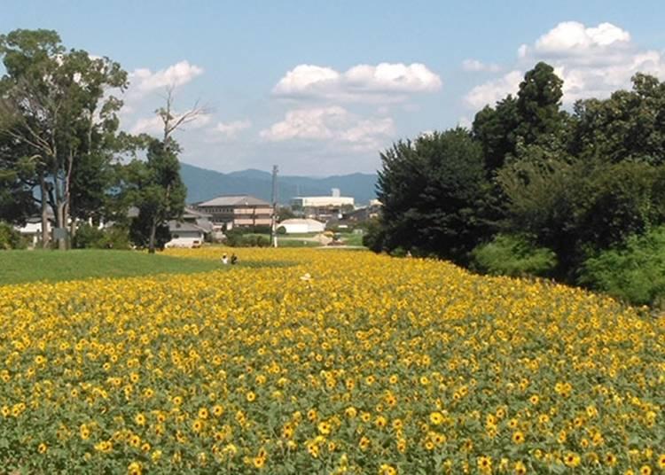 8.歴史と自然に囲まれた憩いの空間「奈良県営馬見丘陵公園」