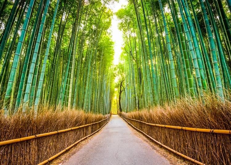 2.風で揺れる竹の音に涼を感じる「竹林の小径」