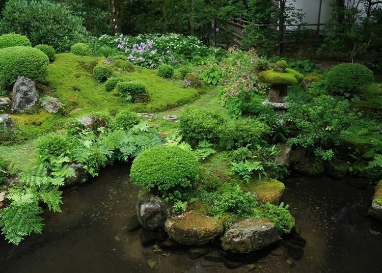 6. 이끼가 아름다운 정원에서 더위를 달래는 '산젠인'