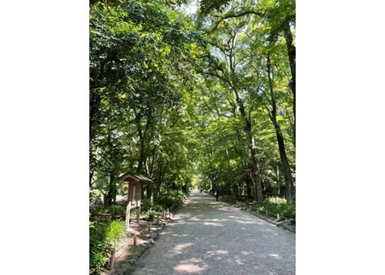 1.位於街道中的療癒森林~下鴨神社 糺之森