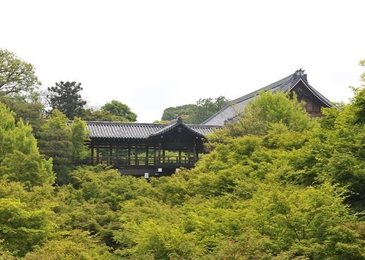 3.翠綠楓樹和溪谷帶來涼爽感受~東福寺