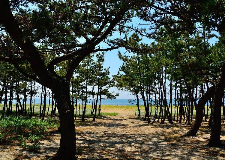 1. 소나무 숲에서 바라본 석양이 아름다운 '게이노마쓰바라 해수욕장' [효고]