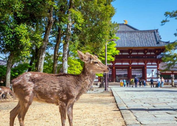 「奈良」旅行完全ガイド!東大寺や奈良公園などの観光スポットに詳しいアクセスも