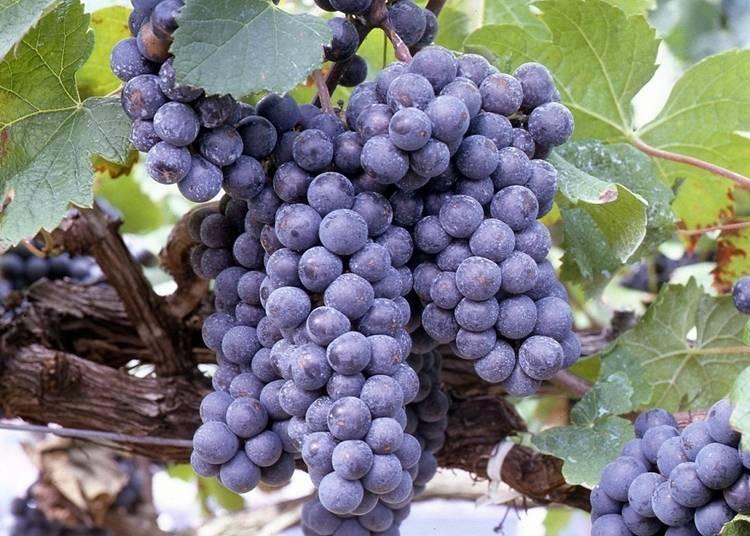 7:天童ワインを楽しむ