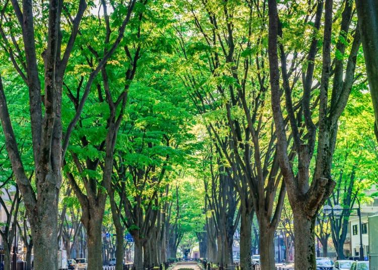 What Kind of Places are Miyagi & Sendai?