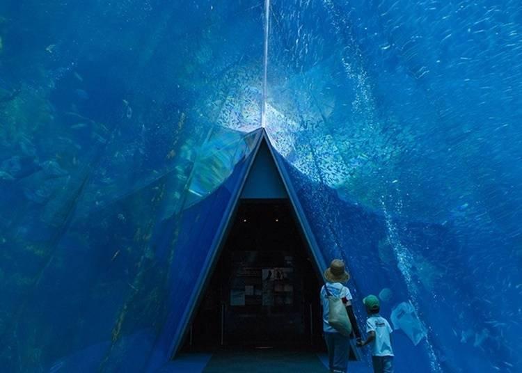 5.在環境水族館海藍寶石福島觀賞海洋生物