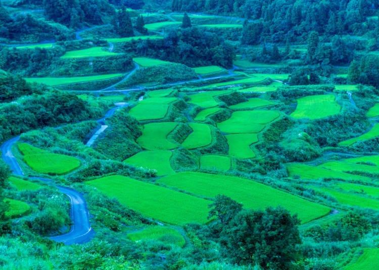 2. Hoshitoge Rice Terraces