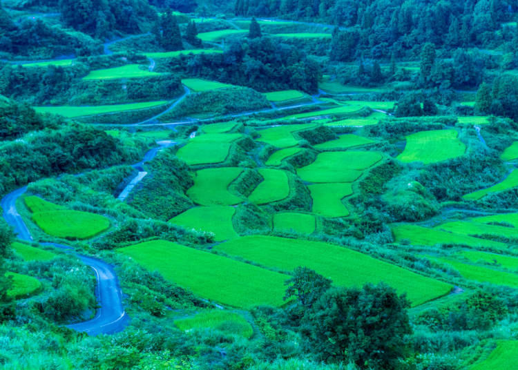 2. Gaze out at the Hoshitoge Rice Terraces