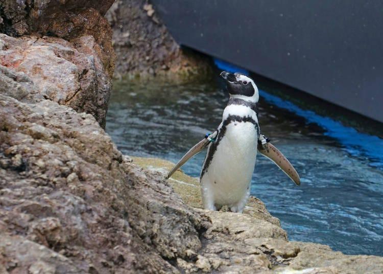 5. 니가타시 수족관 마린피아에서 바다 생물의 매력에 접한다