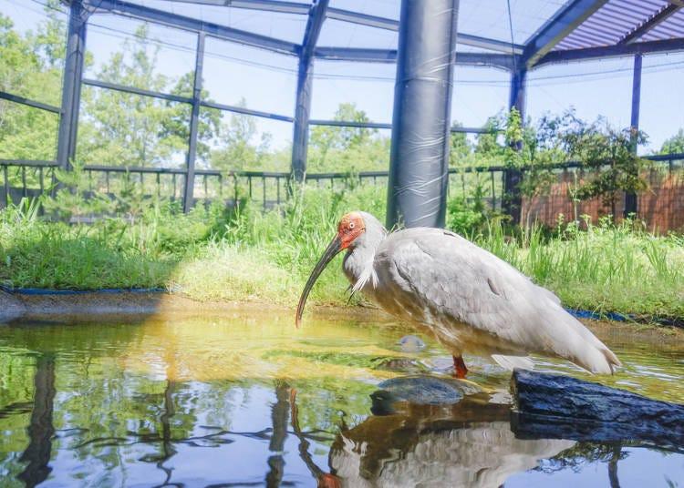 新潟自由行體驗④朱鷺的森林公園