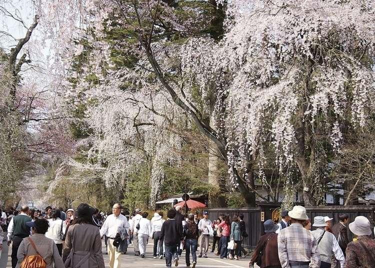 Fun in Tohoku and Akita: Most Popular Tourist Destinations - LIVE JAPAN