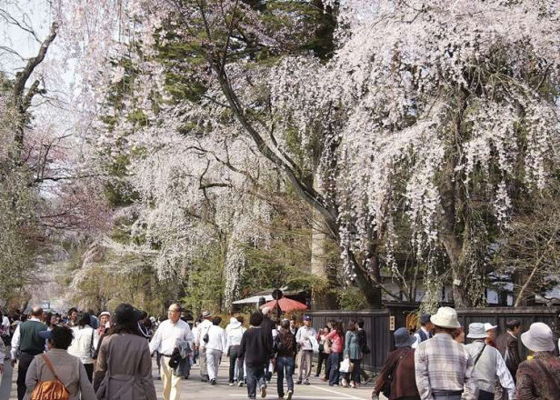 20 Fun Things to Do in Akita Prefecture! Recommended Sightseeing, Local Foods, and Souvenirs