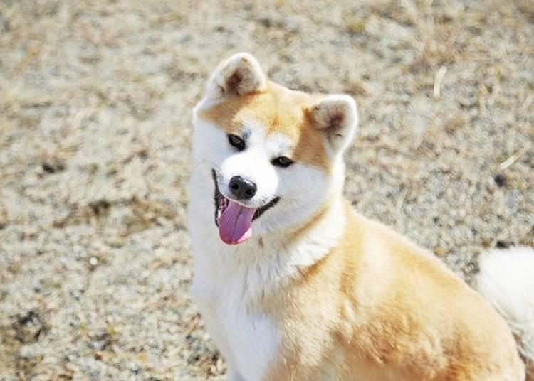 6.秋田犬と記念撮影
