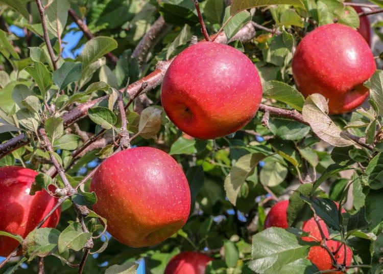 1. Apples