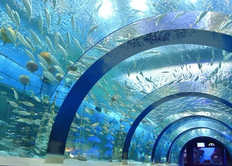 6. Asamushi Aquarium