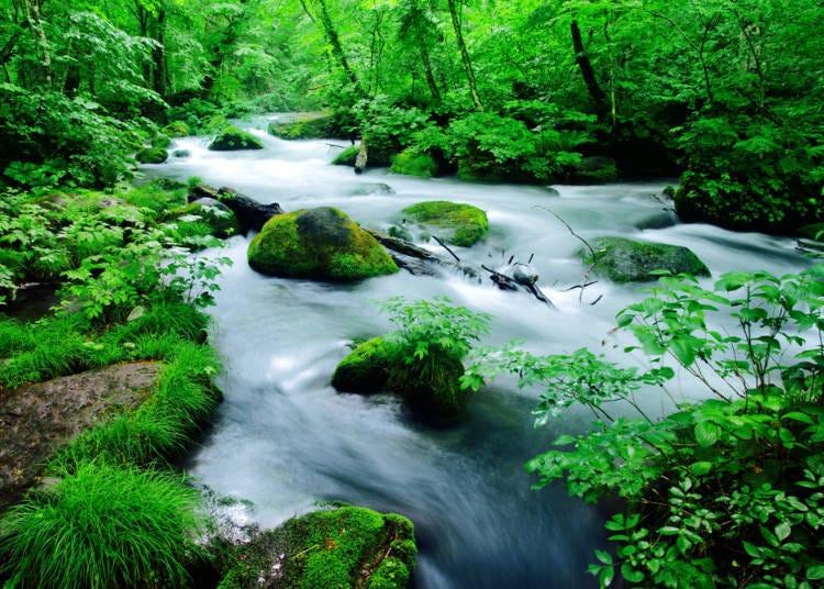 3.奥入濑溪流