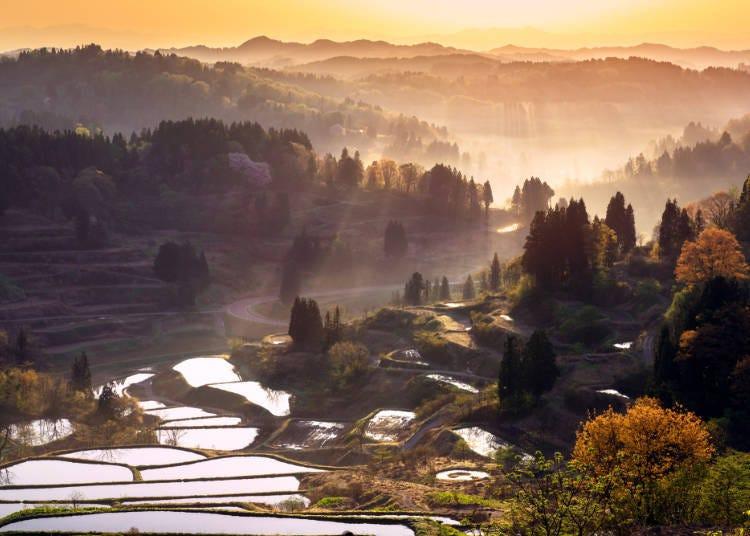 美丽的梯田位于新泻県内陆地区