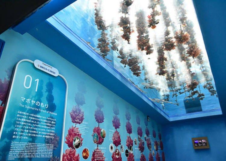 Looking inside Sendai Umino-Mori Aquarium