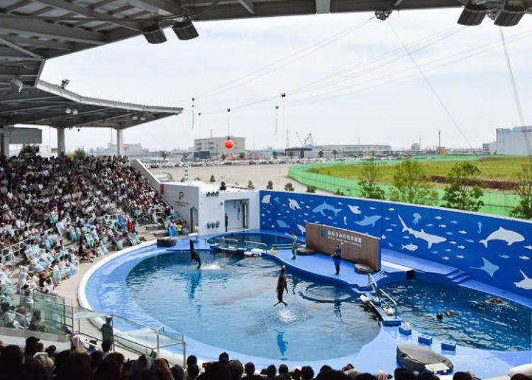 Dolphins and Sea Lions Perform at Tohoku's Largest Aquatic Stadium!