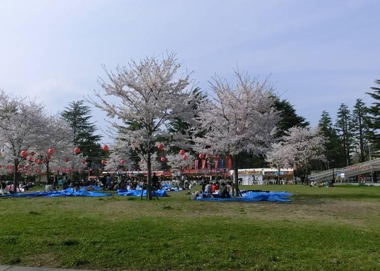 5,西公園(宮城県仙台市) 見ごろ:4月上旬~下旬