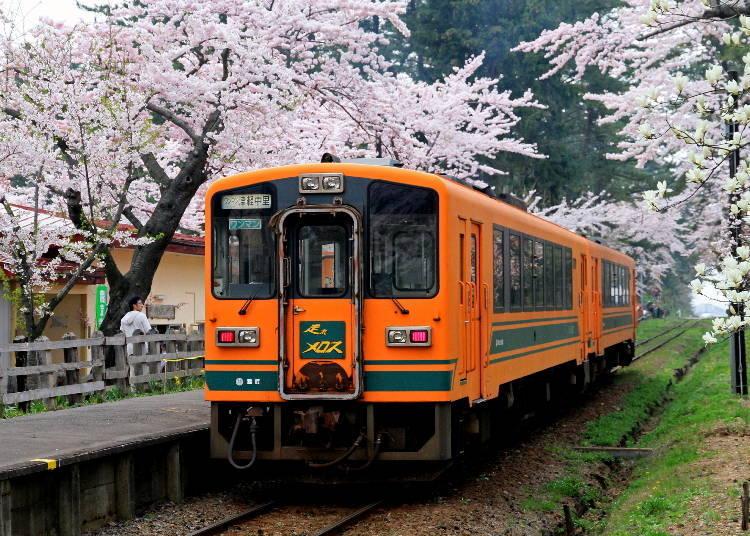 9、蘆野公園 最佳賞櫻時期:4月底~5月初