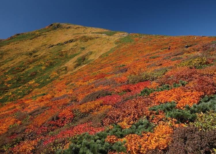 6.栗駒山 見ごろ:9月下旬~10月上旬