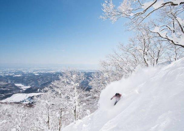 东北滑雪场的特色为何?