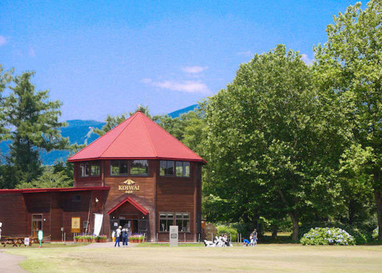 (Iwate Prefecture Guide) Eat, Learn and Play at Koiwai Farm!