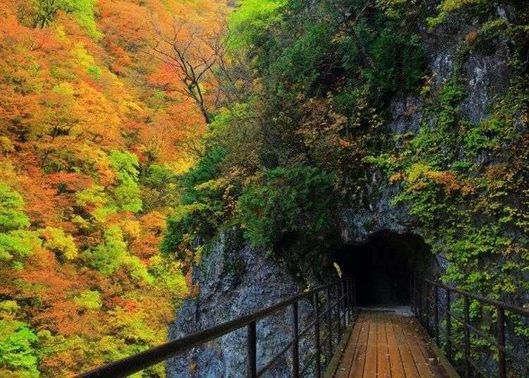 (Tohoku Japan Guide) Akita's Dakigaeri Gorge: Refreshing Cobalt Blue Stream and Vibrant Fall Foliage