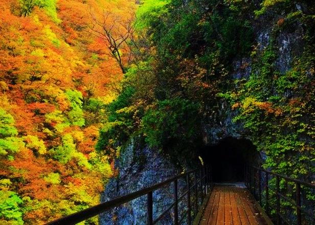 Dakigaeri Gorge Hiking Guide: Pristine Blue-Green Stream and Vibrant Fall Foliage in Akita Japan