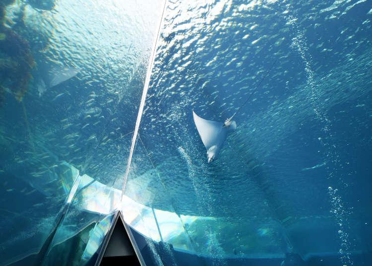 海を歩いているみたい!東北最大級の水族館「アクアマリンふくしま」の楽しみ方